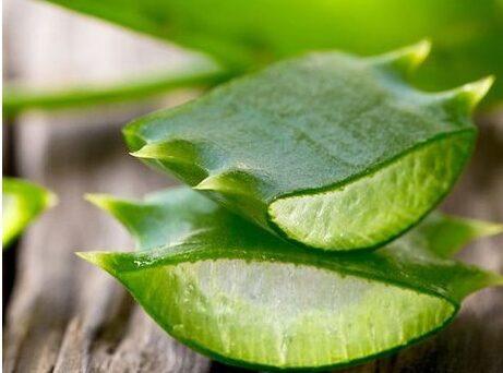 herbal gula darah